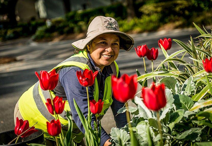 greenery worker smiling planting flowers